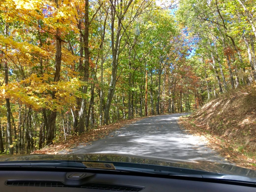 rural road surrounded by trees with autumn leaves