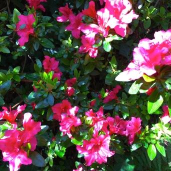 There were an abundance of beautiful flowers